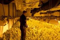 Grote wietplantage opgerold in bedrijfspand De Vaart 8