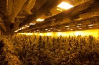 Grote wietplantage opgerold in bedrijfspand De Vaart 1