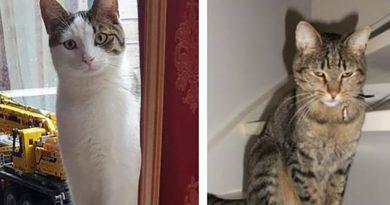 Katten vermist en vergiftigd in Bouwmeesterbuurt