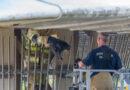 Brandweer redt kat onder brug vandaan